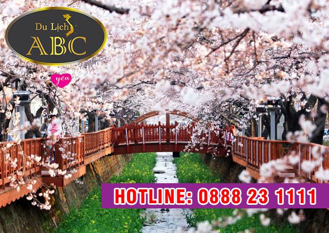 Du Lịch Hàn Quốc - Ngắm hoa anh đào ở Hàn Quốc