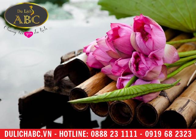 Địa điểm ngắm hoa sen ở gần Hà Nội