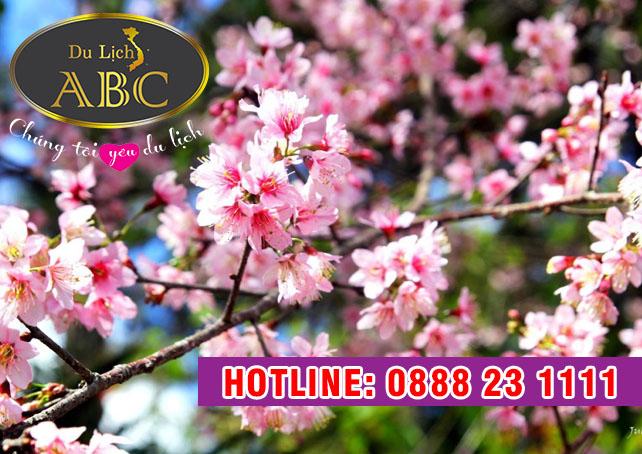 Du Lịch Hè 2018 – Du Lịch Mùa xuân đi Đà Lạt, đã mắt với ngàn hoa