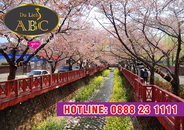 Du Lịch Hàn Quốc - Vương quốc hoa anh đào những ngày tháng 4