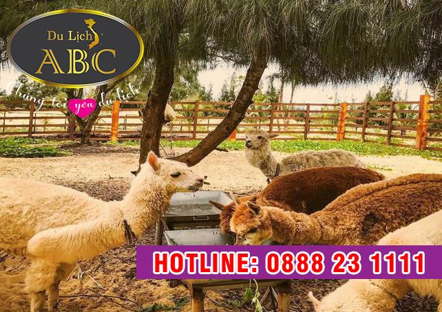 Du lịch Quy Nhơn - Phú Yên - Công viên hoang dã FLC Zoo Safari Park