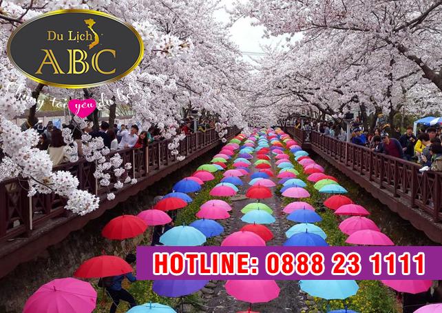 Du Lịch Hàn Quốc - Day tour ngắm hoa anh đào tại lễ hội hoa Jinhae
