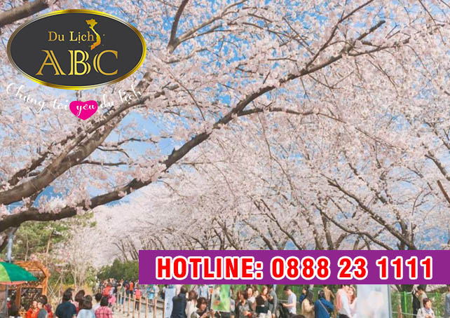 Du Lịch Hàn Quốc - Lễ hội hoa anh đào ở Jinhae, tỉnh Gyeongnam Hàn Quốc
