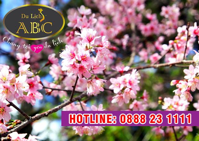 Du Lịch Hè 2018 – Du Lịch Đà Lạt bốn mùa khoe sắc hoa