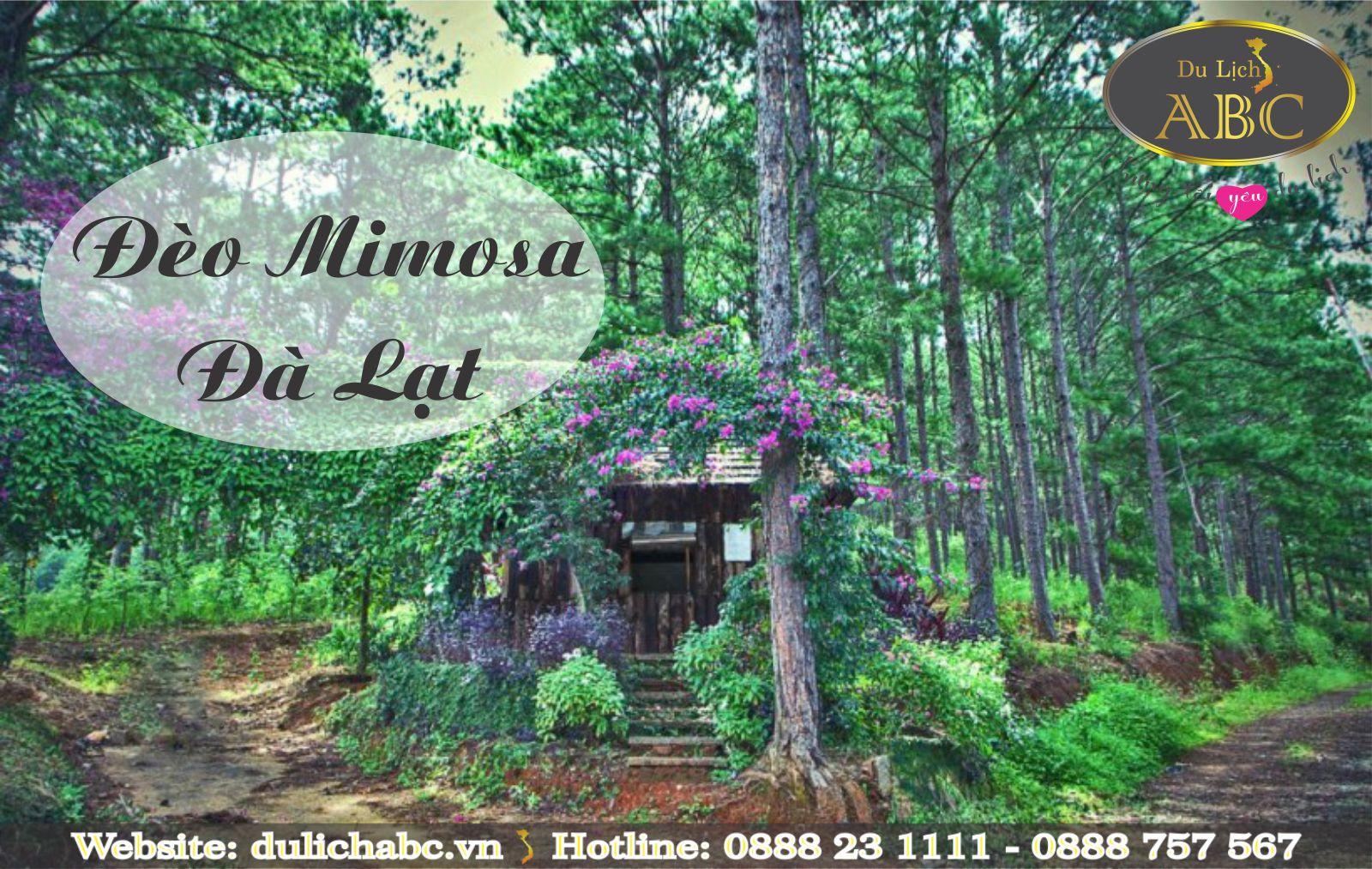 Chinh Phục Con Đèo Mang Tên Loài Hoa Mimosa ở Đà Lạt