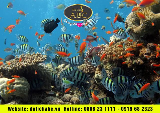 Lặn biển ngắm san hô tại bán đảo Sơn Trà